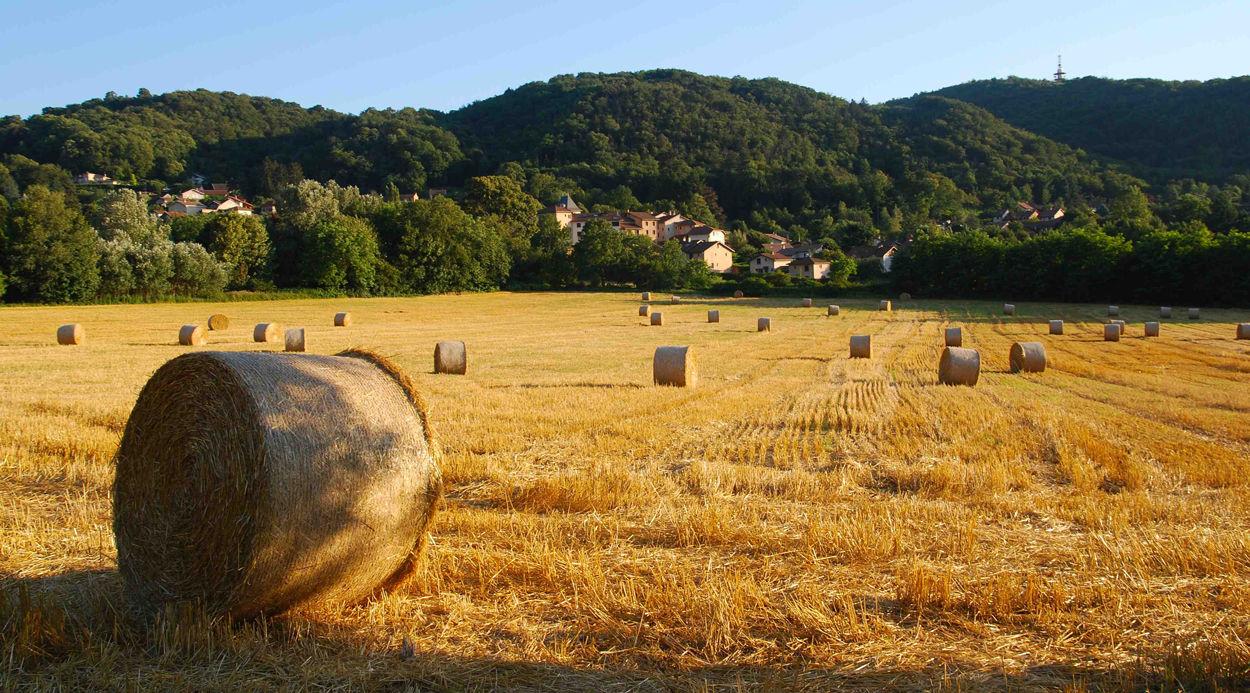 Fallait-il inventer l'agriculture?